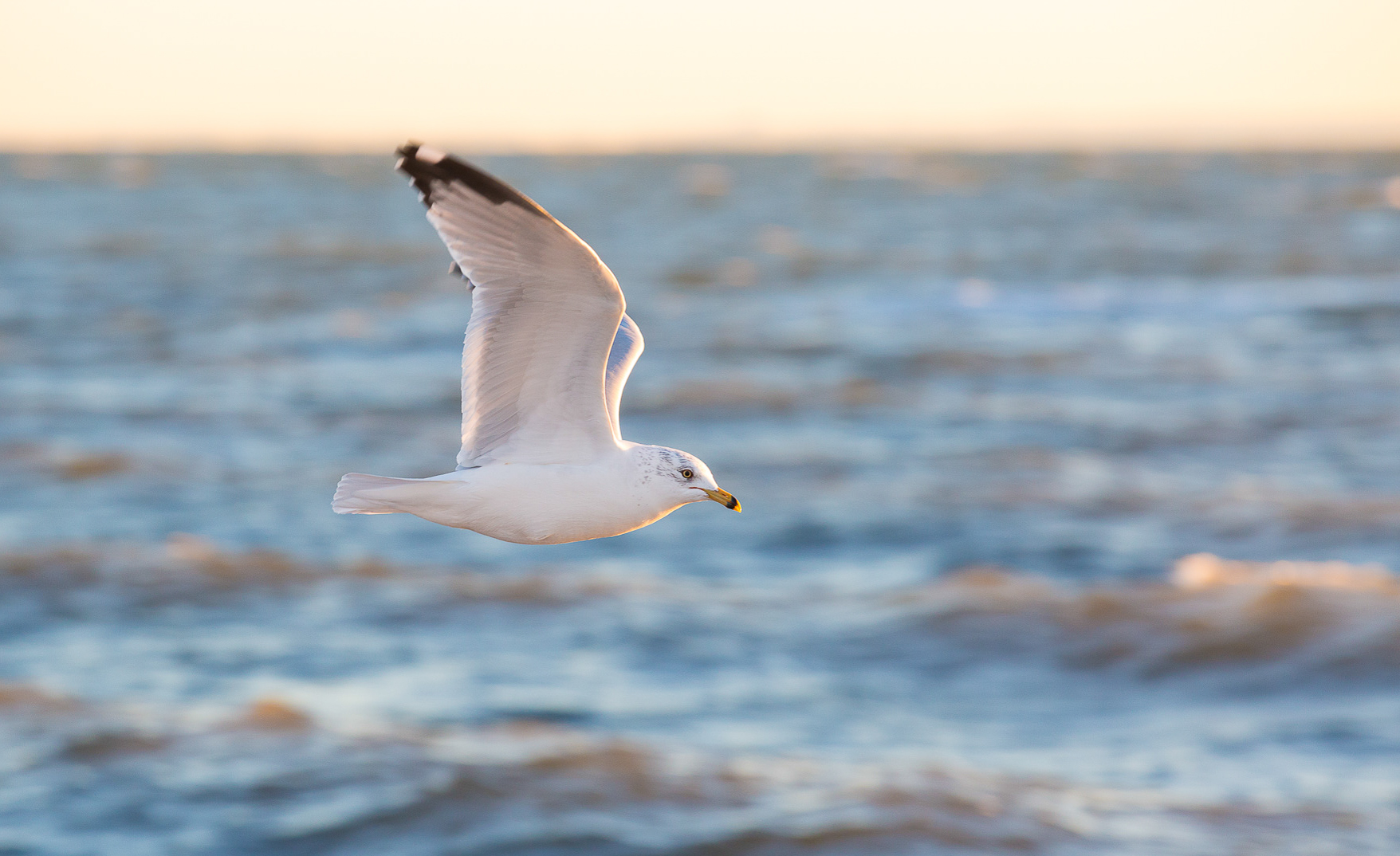 Nancy Moon's Photography of Seagulls in Connecticut