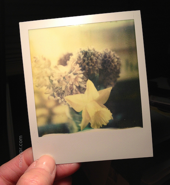 SX70 by Nancy Moon