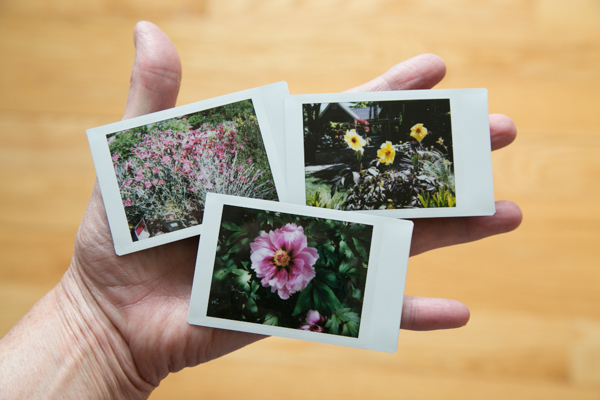 At the garden center this week, taken with my Instax Mini instant camera.