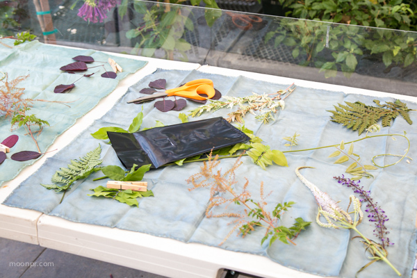 Placing the flowers on the fabric, under the sun with plexiglass on top.