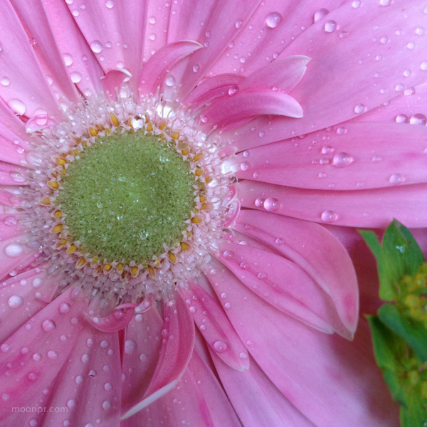 Pink with a macro.