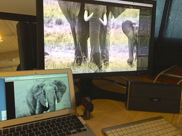 My elephants in Lightroom.