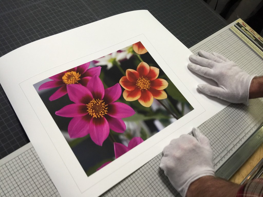 Pinwheel-dahlia-printer-by-Nancy-Moon