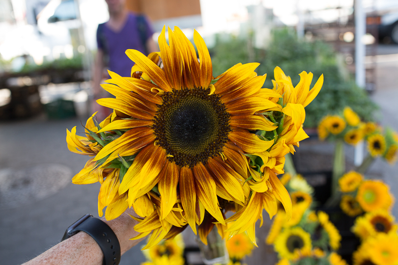 sunflower-market-nancymoon-6767