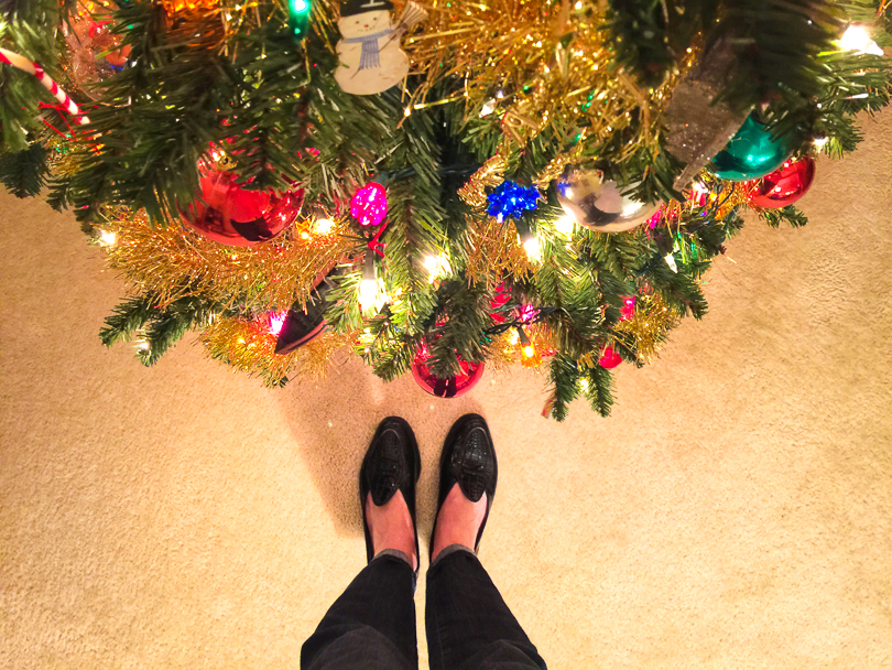 tree at my feet