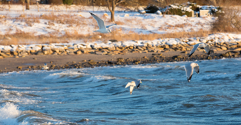 seagull-southport-snow-8505
