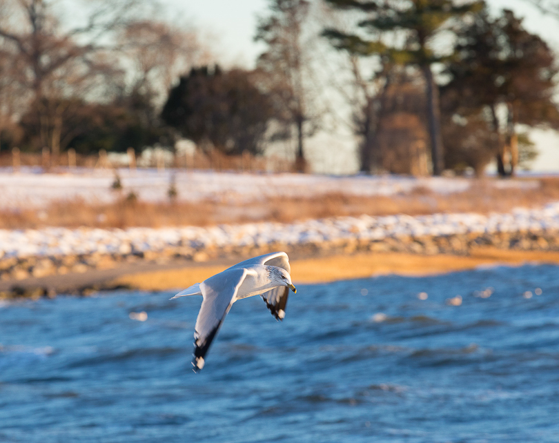 seagull-southport-snow-8540