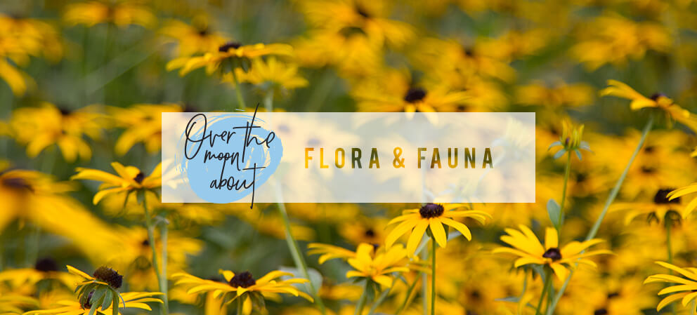 over the moon about flora and fauna