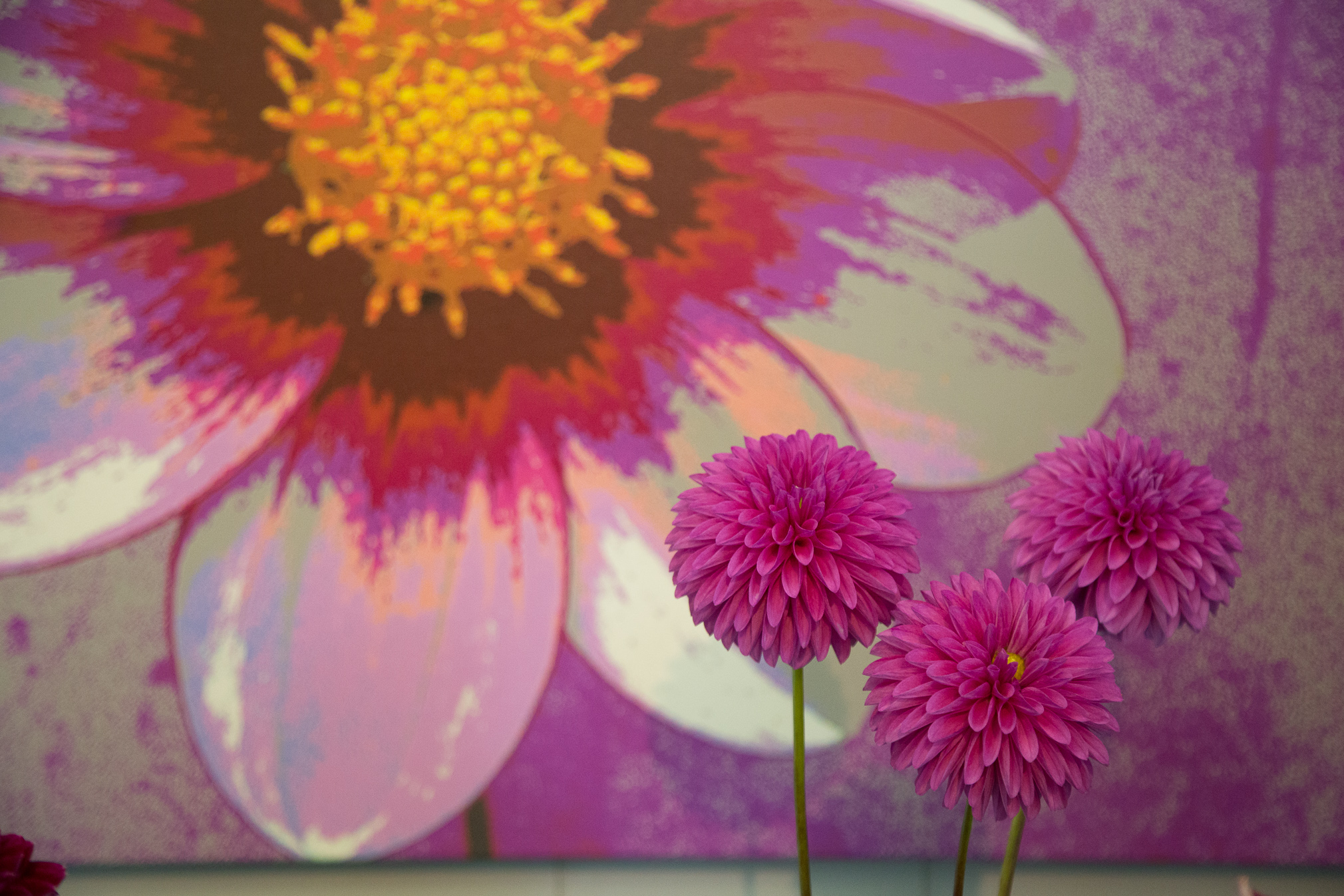 Three Pink Dahlias in Front of A Dahlia Painting